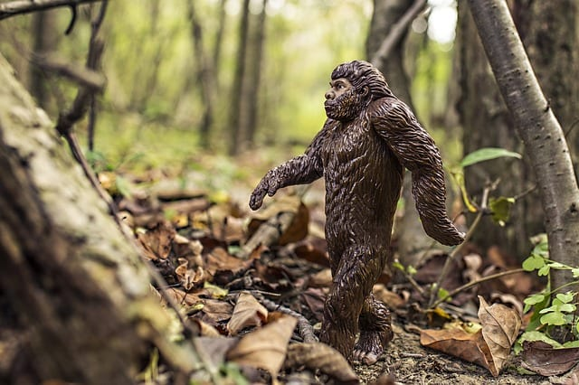 Bigfoot by Stephen Cooper
